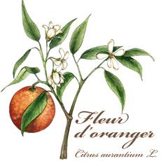 Fleur d'oranger