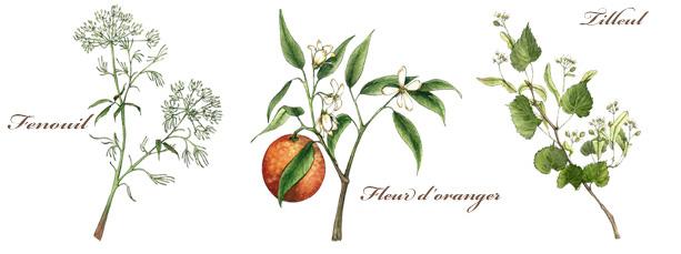 Fenouil - Tilleul - Fleur d'oranger