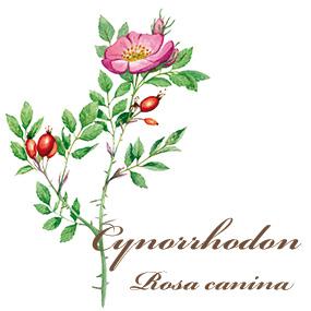Cynorrhodon Calmosine Allaitement