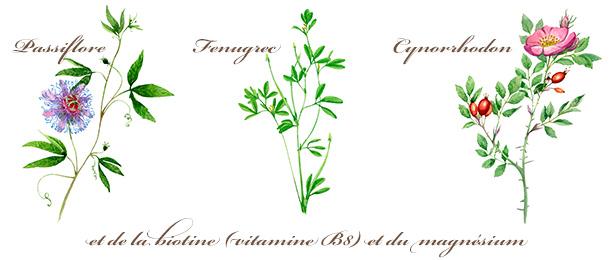 Plantes Calmosine Allaitement