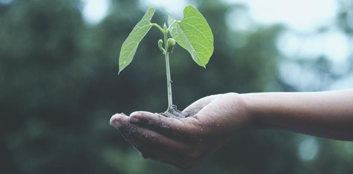 plantes et phytotherapie