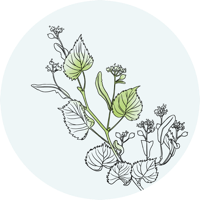plante digestion