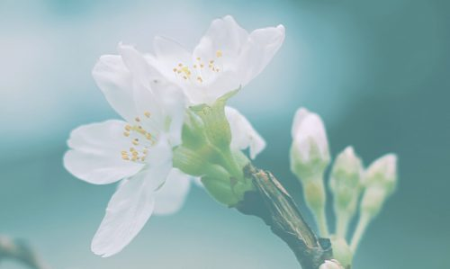 Phytothérapie : quelles plantes pour favoriser l'allaitement?
